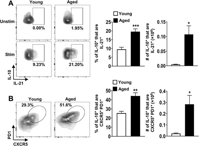 IL-10–producing FoxP3 − CD4 + T cells in aged mice are predominantly Tfh cells. ( A ) Splenocytes from young (2 months, n = 6) and aged (18 months, n = 6) C57BL/6 mice were stimulated with P + I, stained with antibodies against TCRβ, CD8, FoxP3, IL-10, and IL-21, and analyzed by flow cytometry. The representative plots and graphs show the frequencies and total numbers of IL-21 + cells originating from FoxP3 − IL10 + cells (means ± SEM). Data are representative of at least two independent experiments. ( B ) Splenocytes from young (2 months, n = 4) and aged (18 months, n = 4) C57BL/6 mice were stimulated as above and stained with antibodies against TCRβ, CD8, FoxP3, CXCR5, PD1, and IL-10 and analyzed by flow cytometry. The representative plots and graphs show the frequencies and total numbers of CXCR5 + PD1 + cells originating from FoxP3 − IL10 + cells (means ± SEM). * P ≤ 0.05, ** P ≤ 0.01, and *** P ≤ 0.001, Student's t test.