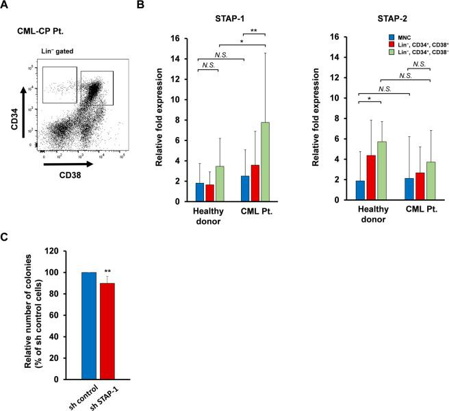The expression of STAP-1 aberrantly increased in human CML LSC subset. a , b BM cells were collected from healthy donor ( n = 7) and newly diagnosed chronic CML patients ( n = 8), and Lin − CD34 + CD38 − hematopoietic stem cells and Lin − CD34 + CD38 + hematopoietic progenitor cells were sorted using flow cytometry. a The representative data of flow cytometry are shown. b STAP-1 and STAP-2 mRNA were measured by real-time RT-PCR in the indicated subsets. Bar graph shows expression levels of STAP-1 and STAP-2 mRNAs normalized to data from MNC fraction of healthy donor. c Lin − CD34 + BM cells from newly diagnosed chronic CML patients ( n = 6) were transduced with control or STAP-1 shRNA lentivirus, cultured in triplicates in methylcellulose medium for 14 days, and colonies were counted. Data are shown as mean ± SD. * p