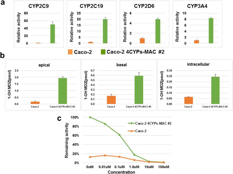Activity of each CYP in the Caco-2 4CYPs-MAC cells. a The metabolic activity of each CYP in Caco-2 4CYPs-MAC cells. The relative activity for each CYP was measured by comparing the parental Caco-2 cells and the Caco-2 4CYPs-MAC #2 (mean ± S.E., n = 3). b Permeability test using MDZ. The permeability test was performed 23 d after seeding Caco-2 cells and Caco-2 4CYPs-MAC #2, whereby 3 μM MDZ was added to the apical side, and after 30 min, the apical, intracellular, and basal supernatants were collected. The 1′-OH MDZ in the supernatant was measured through LC-MS/MS. c CYP3A4 inhibition test. <t>Ketoconazole,</t> an inhibitor of CYP3A4, was added to the Caco-2 4CYPs-MAC #2 and incubated for 1 h. A luminescent substrate was measured to detect CYP3A4 activity with different concentrations of ketoconazole