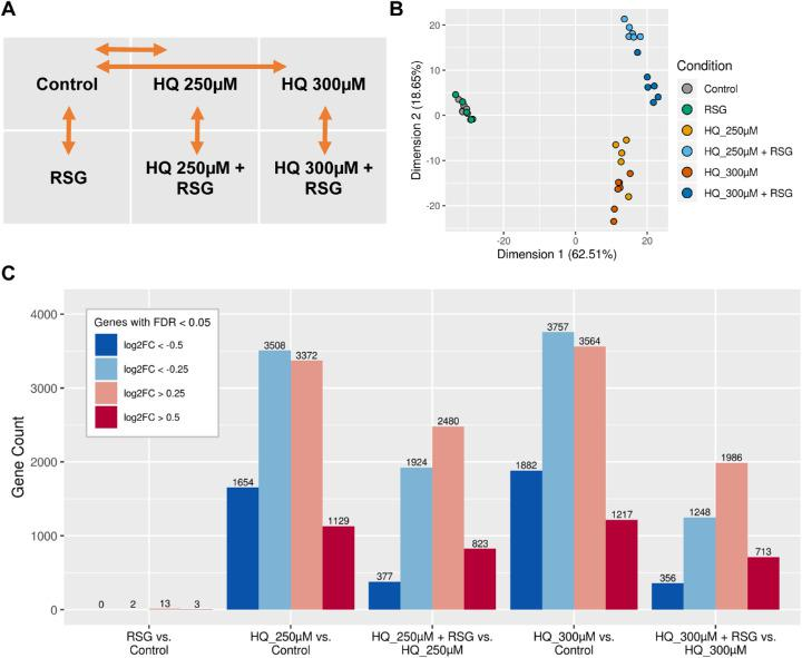 HQ and RSG cotreatment-initiated gene expression changes. RPE cells in sextuplicate wells of 6-well plate were treated for 4 hours with HQ at 250 µM or 300 µM in the presence or absence of RSG. Poly-A–enriched messenger RNAs were isolated and sequenced using RNA-seq. ( A ) The six treatment conditions. Orange arrows indicate the differential expression comparisons performed. ( B ) A principal component analysis was used to visualize the samples on the first two dimensions that captured the largest amount of variance (shown in axis label) in the dataset. First two dimensions showed clear separation between control, HQ-treated, and RSG cotreated cells. ( C ) The edgeR software was used to identify genes that are DE between selected conditions. The number of genes that passed the false discovery rate and log2-fold change thresholds are shown. The number of genes that were strongly downregulated, downregulated, upregulated, or strongly upregulated are colored in dark blue , blue , red , or dark red , respectively. Few DE genes were found after RSG treatment alone, whereas HQ treatment and RSG cotreatment induced large transcriptome changes.