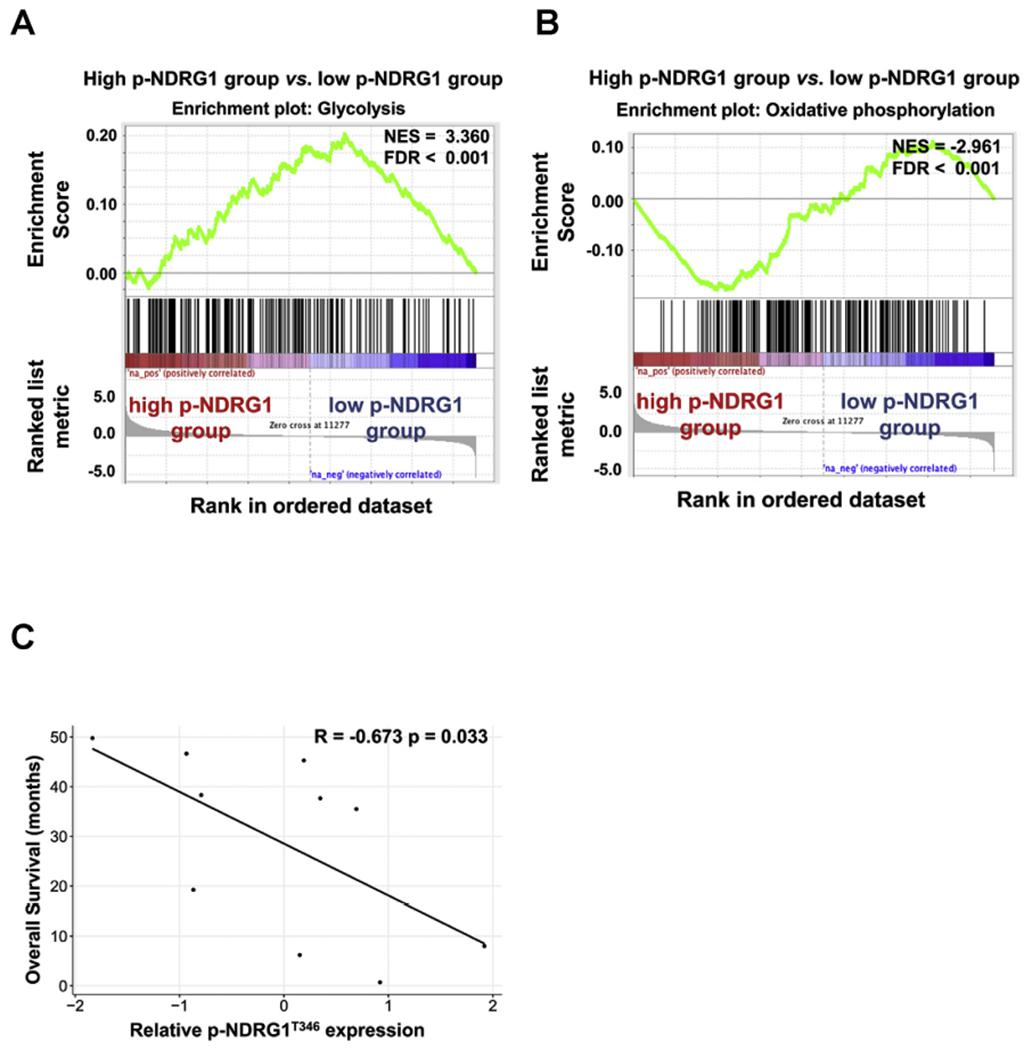 <t>p-NDRG1</t> is able to predict the outcome of EGFR -mutant NSCLC patients. (A and B) GSEA revealed an enrichment of glycolytic genes in patients with EGFR -mutant NSCLC tumors with high p-NDRG1 expression (A) and an enrichment of oxidative phosphorylation genes in EGFR -mutant NSCLC patients with low p-NDRG1 expression (B). NES, normalized enrichment score. FDR, false discovery rate. (C) Correlation between p-NDRG1 expression and overall survival (OS) in NSCLC patients with EGFR driver mutations. The reverse phase protein array (RPPA) data for the relevant patients were downloaded from The Cancer Proteome Atlas (TCGA) database. The X-axis shows batch-normalized protein expression levels of p-NDRG1. The survival time of each patient is shown in the Y-axis in months. Black line denotes the linear fit.