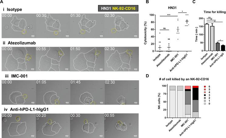Live cell imaging-based analysis of NK cell cytotoxicity. (A) Representative time-lapse images of interaction between <t>NK-92-CD16</t> cells (yellow lines) and HN-31 cells (white lines) treated with various antibodies. (B–D) Effects of antibody treatment on overall cytotoxicity (B), time for killing (C), and number of cancer cells killed by an NK cell (D). Mann-Whitney test was used. *P