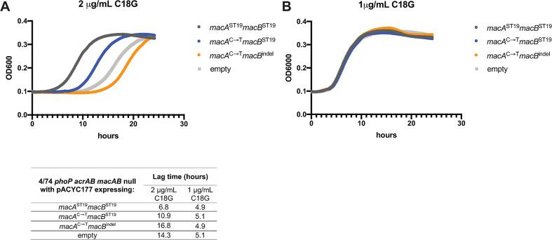 S . Typhimurium ST19 macAB provides superior resistance to the antimicrobial peptide C18G. 4/74 phoP acrAB macAB null mutants with low-copy pACYC177 plasmids constitutively-expressing macAB variants (pJH14-17, see S3 Table ) were grown in N minimal medium, pH 7.4 and 1mM MgCl 2 . Overnight stationary phase cells were washed and normalized to OD600 = 1 before 1:200 final dilution into fresh N minimal medium with 2μg/mL C18G (A) or 1μg/mL C18G (B). OD600 was monitored over time using a BioTek Synergy HTX plate reader. Growth curves presented here are from one experimental run and representative of three independent experiments. Plotted data points are the geometric mean of quadruplicate or triplicate microplate wells. Lag time (inset table) was determined as time to reach OD600 = 0.15.