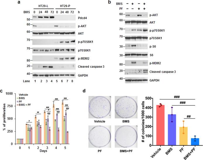 BMS-754807-induced p70S6K1 phosphorylation contributes to cell survival. a BMS-754807 induced p70S6K1 phosphorylation in Pdcd4 knockdown cells. Western blot analyses were performed using cell extracts from control (HT29-L) and Pdcd4 knockdown (HT29-P) cells treated with BMS-754807 (240 nM) for 0–72 h. Representative images are shown. b A combination of BMS-754807 and PF-4708671 reversed the BMS-754807-induced p70S6K1 activation and increased the cleaved caspase 3 level. Western blot analyses were performed using cell extracts from cells treated with vehicle, BMS-754807 (240 nM), PF-4708671(10 μM), and BMS-754807 (240 nM)+PF-4708671 (10 μM) for 72 h. Representative images are shown. c , d The combination of BMS-754807 and PF-4708671 inhibits the proliferation and colony formation. c HCT116 cells were treated with vehicle, BMS-754807 (240 nM), PF-4708671 (10 μM), BMS-754807 (240 nM)+PF-4708671 (10 μM) for 0–5 days. Cell viability was determined by XTT. The absorbance at day 0 is designated as 100%. Data from four replicates were analyzed one-way ANOVA with Dunnett's multiple comparison (mean ± SD; # P