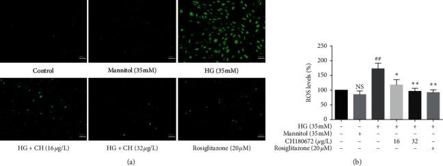 Effect of CH on intracellular reactive oxygen species (ROS) production in HG-induced HUVECs. (a) Intracellular ROS levels in HUVECs were assessed DCFH-DA probe after treated with high glucose (HG, 35 mM) with or without CH for 24 h. HUVECs were loaded with DCFH-DA in the dark at 37°C for 40 min and then pictures were collected with a fluorescence microscope (magnification 200×). (b) Intracellular fluorescence was measured using a fluorescence microplate at excitation and emission wavelengths of 488 and 525 nm. Results were represented as the mean ± SEM ( n = 3). N.S P > 0.05 vs. control group; ## P