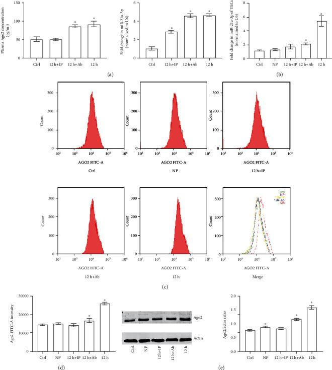 Ago2 and miR-21a-3p levels in TECs stimulated with differently treated plasma. (a) Quantitative analysis of the results from ELIA for Ago2 and RT-PCR for miR-21a-3p of plasma with or without treatments. (b) Quantitative analysis of RT-PCR results of miR-21a-3p of TECs treated with different plasma. (c) Representative results of flow cytometry for Ago2 in TECs treated with different plasma. (d) Quantitative analysis of the results of flow cytometry for Ago2 in TECs treated with different plasma. (e) Representative Western Blot results of Ago2 in TECs treated with different plasma ( ∗ P