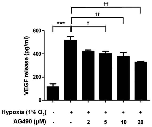 AG490 suppresses hypoxia-induced VEGF release. ARPE-19 cells were exposed to hypoxia and treated with the indicated concentrations of AG490 for 24 h. VEGF release was measured by ELISA. ***P