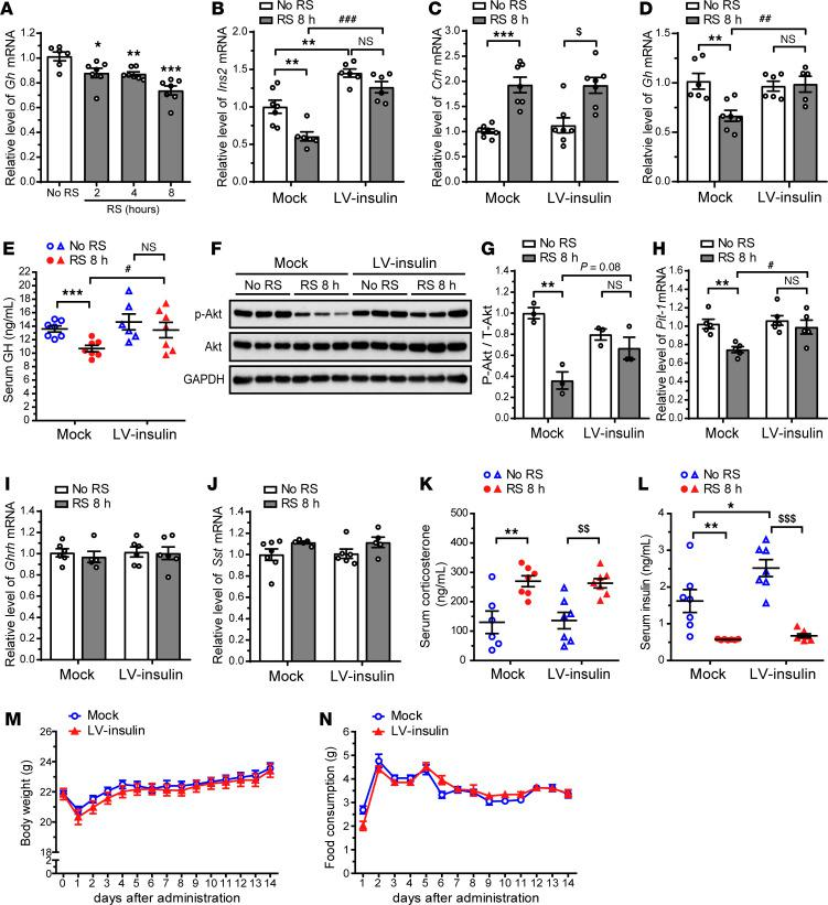 Insulin overexpression in the PVN of adult mice prevents acute RS–induced reduction in pituitary GH gene expression and secretion. ( A ) Time course study of Gh mRNA levels in the pituitary of adult mice after acute RS. ( B – L ) <t>Lentiviral</t> vector expressing GFP (empty control vector, mock) or GFP and Ins2 (LV-insulin) was injected into the PVN of adult mice. Two weeks after the injection, mice were exposed to acute RS for 8 hours (RS 8 h). qRT-PCR data showing the efficiency of PVN insulin overexpression ( B ). Relative hypothalamic Crh mRNA levels ( C ). Relative pituitary Gh mRNA levels ( D ). Serum GH concentrations ( E ). Immunoblot analysis of p-Akt (Ser473), Akt, and GAPDH levels ( F ). Quantification of p-Akt levels normalized to Akt ( G ). Relative pituitary Pit-1 mRNA levels ( H ). Relative hypothalamic Ghrh ( I ) and Sst ( J ) mRNA levels. Serum corticosterone ( K ) and insulin ( L ) concentrations. Changes in body weight ( M ) and food consumption ( N ) for 2 weeks after the injection. Data are shown as mean ± SEM, 2-way ANOVA with Bonferroni's post hoc tests. *, # , and $ P