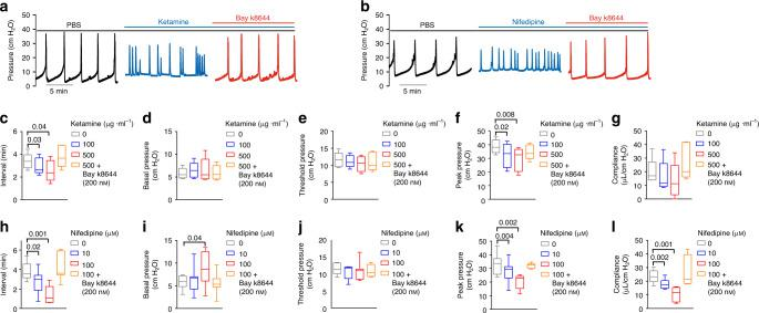 Ketamine and nifedipine regulated mouse urodynamics resembling ketamine cystitis in humans. a , b Representative CMG traces of ketamine cystitis-like voiding phenotypes induced by intravesical ketamine ( a 100, 500 µg ml −1 ) and nifedipine ( b 10, 100 µM) are reversed by Bay k8644 infusion (200 nM). Summarized CMG data ( c – l n = 5 mice for ketamine group and n = 7 mice for nifedipine group) show that decreased voiding interval ( c , h ), peak pressure ( f , k ), and compliance ( g , l ), were each rescued by Bay k8644 infusion. Data are shown as box and whiskers, center line is the median of the data set, box represents 75% of the data, and bars indicates whiskers from minimum to maximum. Data were analysed by paired two tail Student's t -tests. P