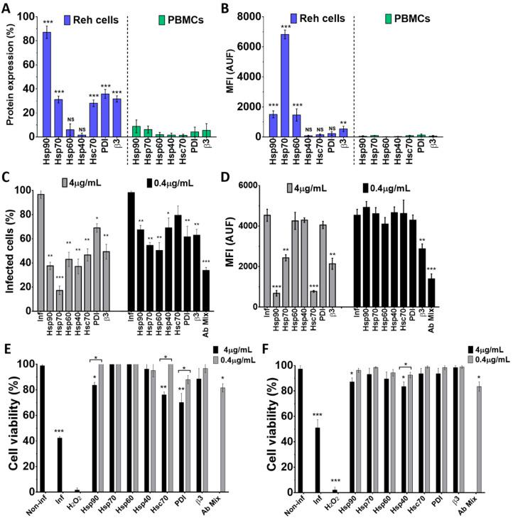 Inhibition of Wt1-5 infection after pre-treatment of Reh cells with antibodies to HSPs, Hsc70, PDI and integrin β3. Reh cells and PBMCs were treated with antibodies to Hsp90, Hsp70, Hsp60, Hsp40, Hsc70, PDI and integrin β3 and labeled with secondary antibodies labeled with FITC, and then, subjected to flow cytometric analysis. ( A ) Flow cytometry analysis for each cellular protein of Reh cells and PBMCs is shown. ( B ) Median fluorescence intensity (MFI) for each cellular protein of Reh cells and PBMCs is shown. Isotype antibodies were used to adjust quadrants. Results are from three different assays. ( C ) Reh cells at a logarithmic growth phase were pre-treated with antibodies (4 or 0.4 mg/mL) to cellular proteins Hsp90, Hsp70, Hsp60, Hsp40, Hsc70, PDI and integrin β3 for 1 h at 37 °C. After removal of antibodies, cells were infected with trypsin-activated Wt1-5 at MOI 2 and harvested at 24 h.p.i. before PFD fixation and permeabilization. Viral structural antigens were analyzed by flow cytometry for each antibody treatment using control isotype antibodies to adjust quadrants. Percentages of Wt1-5-infected cells are shown. ( D ) Median fluorescence intensity (MFI) quantification in terms of arbitrary units of fluorescence (AUF) is shown for viral structural proteins for each antibody treatment described in ( C ). ( E ) Cell viability was assessed with the resazurin reduction test for cells that had previously been treated with antibodies to each cellular protein (Hsp90, 7Hsp0, Hsp60, Hsp40, Hsc70, PDI and integrin β3). Wt1-5 infected cells and non-infected and non-antibody-treated cells were used as a control at 24 h.p.i. ( F ) Cell viability of an aliquot of cells assayed in ( E ) but determined with the trypan blue exclusion test is shown. Data are shown as mean ± SD of three independent experiments performed in duplicate. Statistical significance is indicated by p -values (*** p ≤ 0.01, ** p ≤ 0.05, and * p ≤ 0.1).