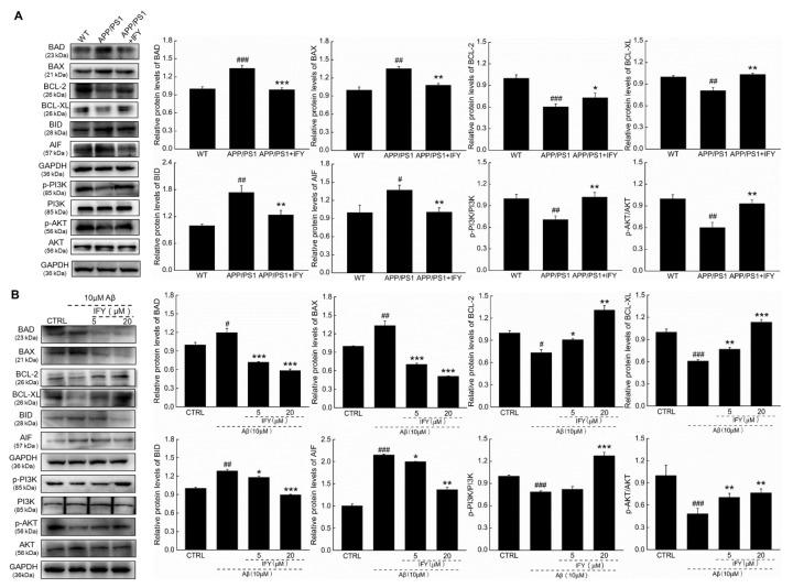 IFY regulated the expression levels of mitochondrial apoptosis-related proteins. IFY ameliorated the expression levels of apoptosis related proteins including BAD, BAX, BCL-2, BCL-XL, BID, AIF, p-PI3K and p-AKT in ( A ) the hippocampus of APP/PS1 mice and ( B ) Aβ 1-42 -exposed U251 cells. Quantification data were normalized by glyceraldehyde-3-phosphate dehydrogenase (GAPDH) and the corresponding total proteins, and are reported as the percentage of those from the corresponding CTRL ( n = 3). Data are shown as the mean ± SEM. # p