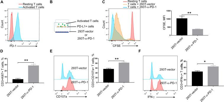 Effects of secreted α-PD-1 scFv on T cell activation. CD3+ T cells from healthy donors were stained with CFSE and then activated by anti-CD3/CD28 beads for 2 days. (A) PD-1 expressions were determined in resting and activated T cells by FACS assay. (B) 293T cells transfected with mock or α-PD-1 scFv-expressing vectors were plated at the bottom. 48 h later, activated T cells were added into the upper transwell chambers with fixed PD-L1-overexpressing A549 cells at the ratio of 1:1 for 24 h. (C) Then the dilutions of CFSE in CD3+ T cells were determined using FACS assay. (D–F) The expressions of Ki67 (D) , CD107a (E) and IFN-γ (F) were further detected in CD3+ T cells after incubation. T cells from 5 donors were tested and the representative results were depicted. * indicates P