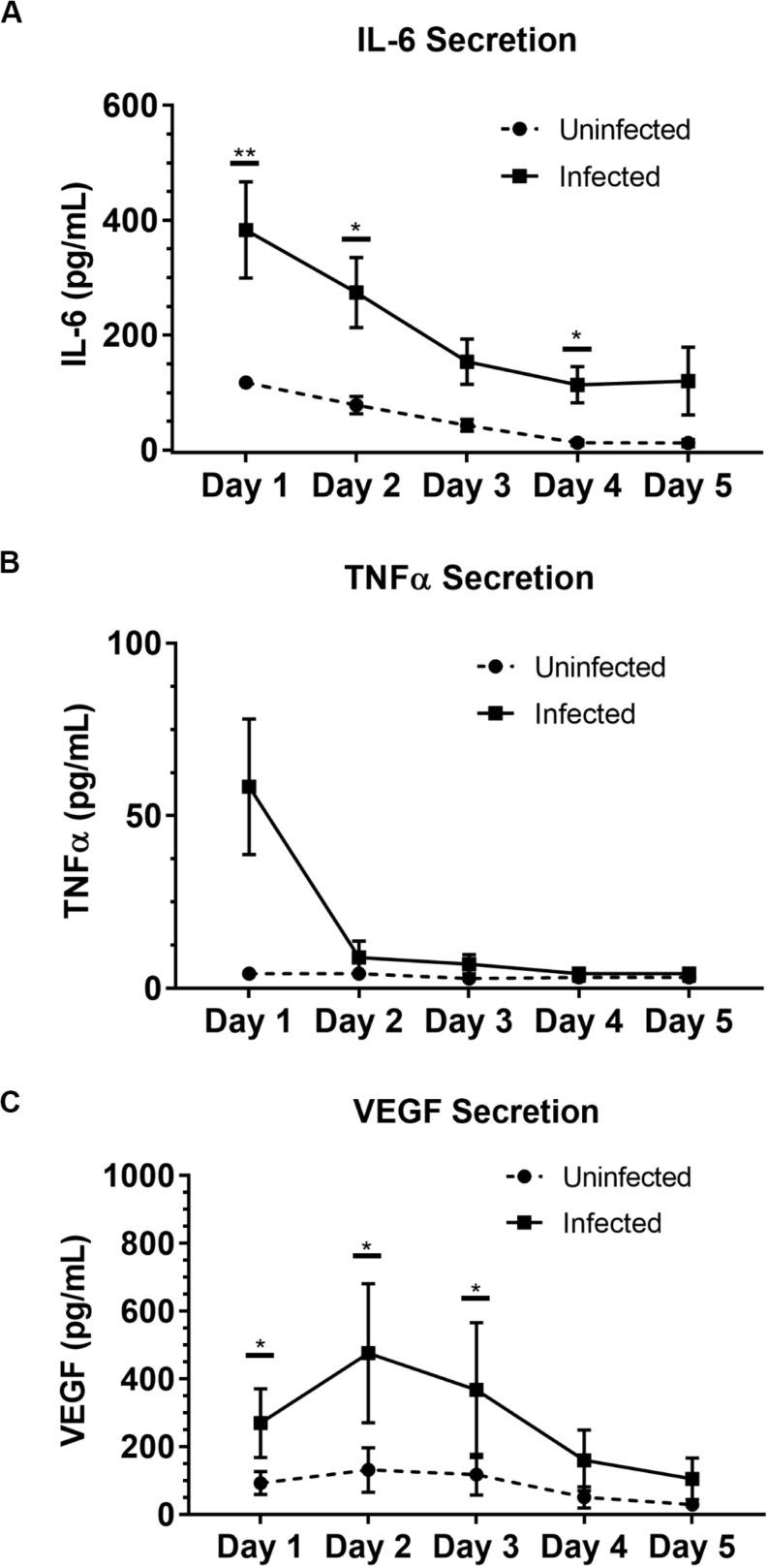 Soluble factor analysis of granuloma layer supernatants illustrates proinflammatory profile of infection model. Infection with BCG causes significant increases in secretion of (A) IL-6 and (C) VEGF in the Stacks platform, and shows an increasing trend in (B) TNFα secretion Day 1 p.i. Secretion of IL-6, TNFα, and VEGF decreases over time in infected granuloma layers following infection, corresponding with the formation of aggregates starting around Day 3 p.i. For Day 1–5 p.i., media was replaced daily and supernatant collected from each day was analyzed. Each point represents pooled supernatant samples from 24 technical replicates from n = 4 independent experiments. Error bars: SEM. * P