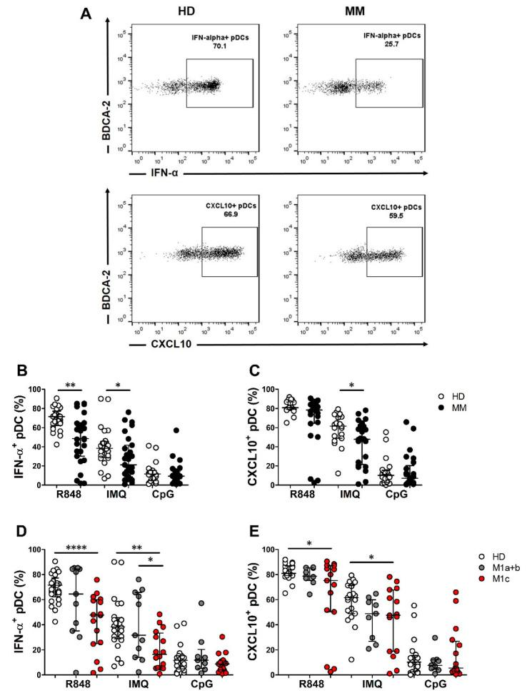 Frequency of interferon alpha (IFN-α) and CXCL10-producing plasmacytoid dendritic cells (pDCs) in chemo-naïve MM patients and HD. Representative dot plots of R848-stimulated IFN-α + and CXCL10 + pDC subsets obtained from HD and MM patients are shown ( A ). PBMCs were isolated from peripheral blood of HD ( n = 25) and MM patients ( n = 29). Total PBMCs were cultured in RPMI 1640 medium supplemented with 10% FBS and IL-3 and stimulated with R848 or IMQ for 2 h ( B , D ) and 6 h ( C , E ), and with CpG-ODN 2216 for 6 h ( B – E ). IFN-α ( B , D ) and CXCL10 ( C , E ) were analyzed by intracellular flow cytometry staining. Scatter dot plot graphs illustrate the percentages of positive pDCs evaluated on BDCA-2 + /CD123 + cells. Subgroup analysis of the MM cohort illustrating the frequency of IFN-α + and CXCL10 + pDCs in M1a-c categories ( D , E ). Median and IQR are shown in ( B , C ). Mean and SD are shown in ( D , E ). The statistical significance was calculated by Wilcoxon–Mann–Whitney test ( B , C ) and by a Student's t -test ( D , E ). * p