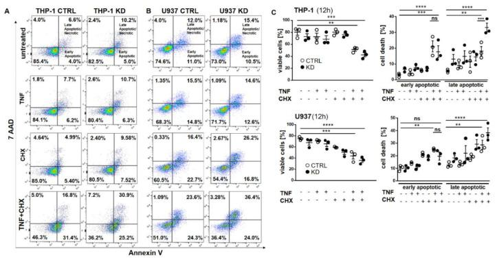 YB-1 was protective against cell death in vitro. ( A , B ) Representative flow cytometry dot plot analyses of THP-1 ( A ) and U937 cells ( B ). Cells were treated with or without TNF (20 ng/mL) and cycloheximide (10 ng/mL) alone or together overnight. Cells were harvested and stained for annexin V and 7AAD. ( C ) Graphs representing flow cytometry analysis of live and dead cells in THP-1 and U937 cells. Statistical significance was calculated by two-way ANOVA with Bonferroni post hoc test, n = 3. Data represent the mean ± SEM. ** p