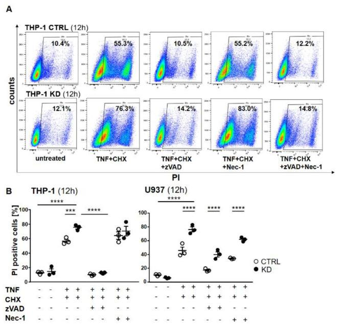 Cell death was rescued using the pan-caspase inhibitor zVAD-fmk (ZVAD). ( A ) THP-1 cells were pretreated with zVAD and/or necrostatin-1 (Nec-1) for 1 h and treated with TNF and CHX overnight. The cells were harvested, stained with propidium iodide (PI), and analyzed by flow cytometry. The percentage of dead cells following treatment is indicated. ( B ) Graphs representing flow cytometry analysis of THP-1 (left panel) and U937 (right panel). Error bars specify the standard error mean (SEM) of at least three experiments. Statistical significance was calculated by two-way ANOVA with Bonferroni post hoc test, n = 3. Data represent the mean ± SEM. *** p ≤ 0.001, **** p ≤ 0.0001.