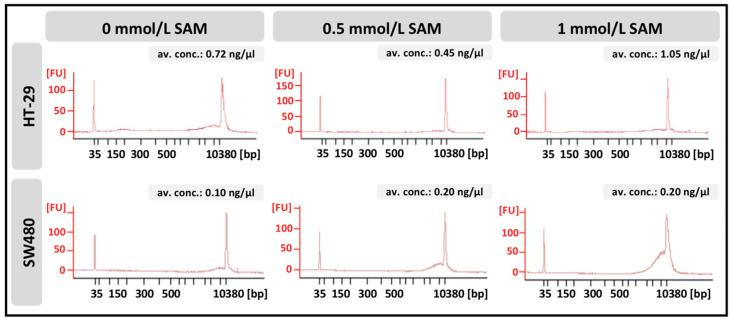 Fragment–length distribution of cell-free <t>DNA</t> isolated from the media of HT-29 and SW480 cells was detected with BioAnalyzer. Electropherograms represent a data plot of size in base pairs (bp) versus fluorescence (FU). Average DNA concentrations were measured with Qubit 1.0 fluorometer. Av. conc.: average concentration.