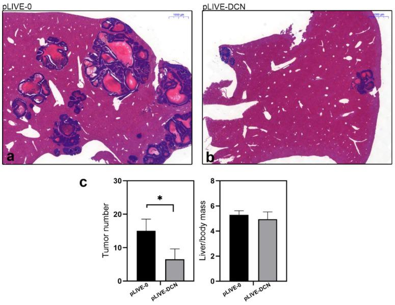 Representative histological images of hematoxylin and eosin-stained control (pLIVE-0) ( a ), and decorin expressing (pLIVE-DCN) ( b ) liver tissues after inoculation of c38 tumor cells. Bar charts ( c ) represent the ratios of tumor-bearing mice in experimental groups of control and DCN expressing groups. In livers overexpressing decorin, a reduced number of liver metastases was observed in parallel with lower liver mass/body ratio. Scale bar = 1000 µm. * p value
