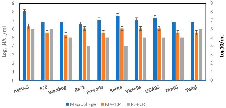 Comparison of the titration of African Swine Fever Virus (ASFV) isolates in swine macrophages (blue) or MA-104 (orange) cells with real-time PCR. Titrations are expressed in log 10 HA 50 /mL, the error bars are the standard deviation between replicates, and rt-PCR is expressed as L]log 10 /mL, indicating the last dilution that had a positive CT value for ASFV.