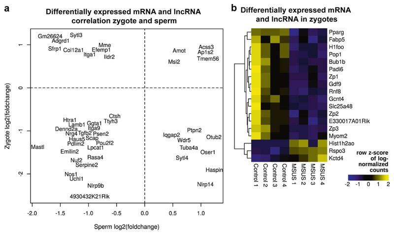Detection of long RNA affected by MSUS in zygotes. a Scatter plot reveals correlation of 47 mRNA and long non-coding RNA (lncRNA) with a p -value less than 0.01 (multiple testing uncorrected) in zygotes resulting from mating of MSUS males with naïve females and a q -value