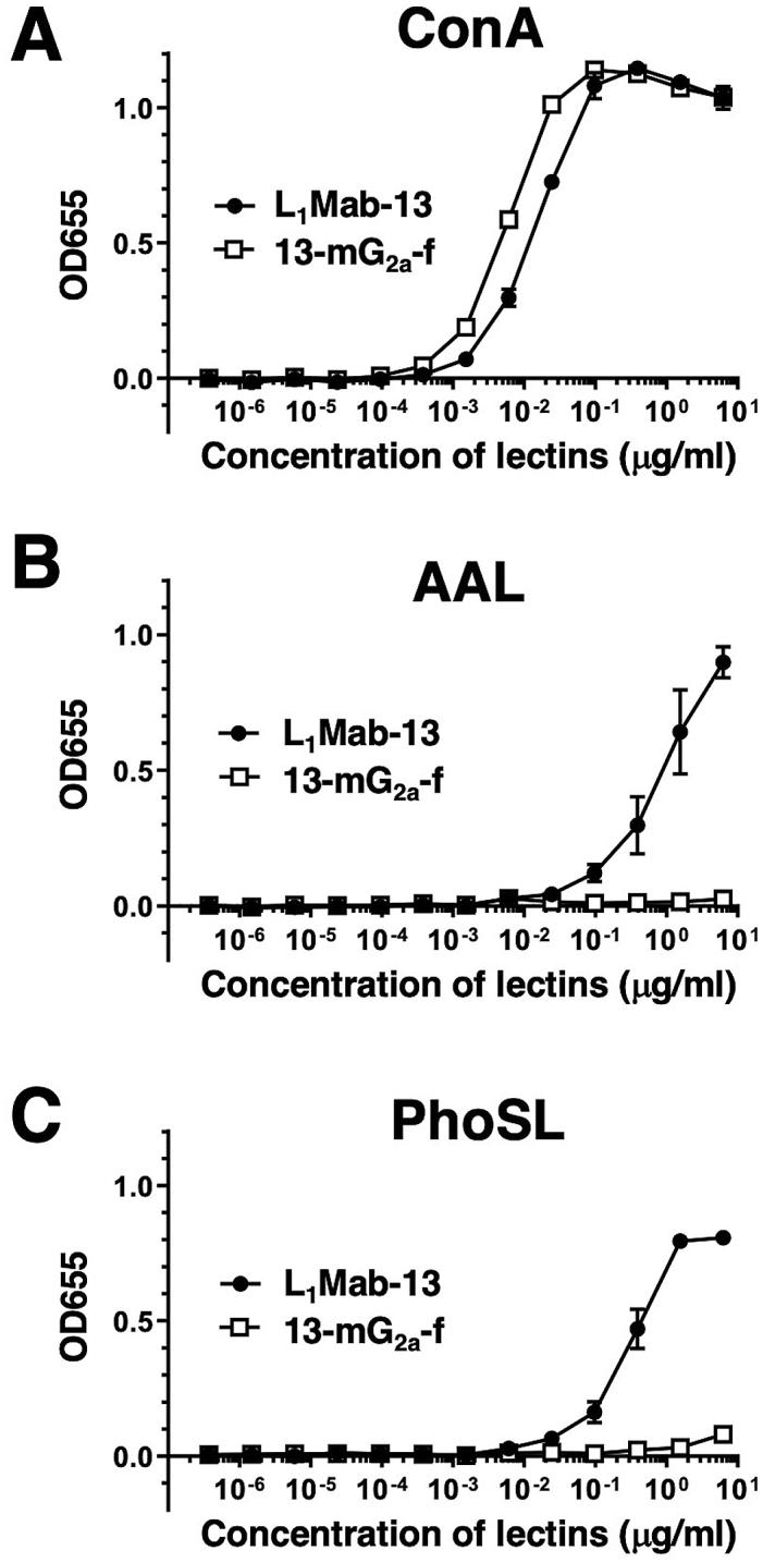 Confirmation of defucosylation of 13-mG 2a -f by enzyme-linked immunosorbent assay (ELISA) using lectins. (A) L 1 Mab-13 and 13-mG 2a -f were immobilized and incubated with biotin-labeled concanavalin A (Con A), followed by peroxidase-conjugated streptavidin. OD 655 was measured as a function of Con A concentration. (B) L 1 Mab-13 and 13-mG 2a -f were immobilized and incubated with biotin-labeled Aleuria aurantia lectin (AAL), followed by peroxidase-conjugated streptavidin. OD 655 was measured as a function of AAL concentration. (C) L 1 Mab-13 and 13-mG 2a -f were immobilized and incubated with biotin-labeled Pholiota squarrosa lectin (PhoSL), followed by peroxidase-conjugated streptavidin. OD 655 was measured as a function of PhoSL concentration.