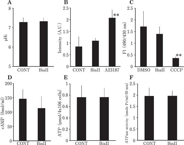 Measurement of various sperm parameters in the presence of BisII. Intracellular pH (pH i ) (A), intracellular Ca 2+ concentration (B) and mitochondrial activity (C) were measured by spectrofluorometry. cAMP (D), ATP (E) and ATPase activity (F) in the sperm lysates were assayed using a microplate reader. Values are means±SD of 3 independent experiments. No significant difference was found between CONT (vehicle alone) and BisII (1 µ M) in all parameters tested. In panel B, calcium ionophore, A23187 (1 µ M) was added as a positive control. In panel C, uncoupler CCCP (10 µ M) was included as a negative control.