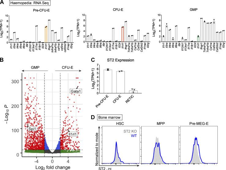 Association between IL-33 and erythroid progenitors. (A) Frequency of transcript counts for indicated cytokine receptor genes in indicated progenitor populations. Gene for the IL-33 receptor, ST2, is highlighted. Data derived from Haemosphere RNA-sequencing database of BM progenitors. Bars represent mean and SEM of two biological replicates. (B) Volcano plot comparing gene expression between GMP and CFU-E. The IL-33 receptor gene, Il1rl1 , is highlighted, along with critical erythroid ( Gata1 ) and myeloid ( Spi1 , PU.1) transcription factors. Data derived from comparison of two paired replicates from independent experiments in the Haemosphere database. (C) Frequency of transcript counts for Il1rl1 (encoding ST2) among indicated progenitor populations. RETIC, reticulocyte. Bars represent mean and SEM of two biological replicates from the Haemosphere database. (D) Representative images of flow cytometric expression of the ST2 receptor on indicated progenitor populations in BM of WT and ST2 −/− (ST2 KO) mice. ST2 −/− mice were on C57BL/6 background; WT mice were bred under the same conditions. HSCs: Lineage neg , Sca1 + , cKit + , CD150 + , CD48 − ; MPPs: LSK, CD150 − , CD48 + ; pre-MEG-E, premegakaryocyte-erythroid progenitor (Lineage neg , Sca1 − , cKit + , CD41 − , CD16/32 − , CD105 − , CD150 + ). Representative of two independent experiments.