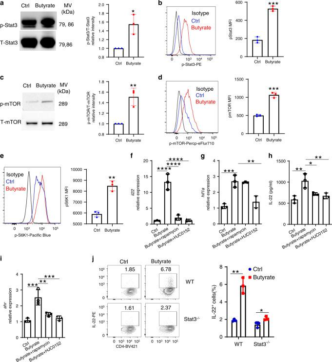 Stat3 and mTOR regulate IL-22 production by CD4 + T cells. a–d WT CD4 + T cells were activated with anti-CD3/CD28 mAbs under Th1 conditions with or without butyrate (0.5 mM) ( n = 3/group). Phosphorylated Stat3 (6 h) ( a , b ) and phosphorylated mTOR (24 h) ( c , d ) were assessed by western blot and flow cytometry. Phosphorylated S6K was analyzed by flow cytometry ( e ). f – i CBir1 Tg CD4 + T cells were activated with APCs and CBir1 peptide under Th1 conditions with butyrate (0.5 mM) ± rapamycin (1 µM) or HJC0152 (1 µM). IL-22 mRNA ( f ) and protein ( g ) were assessed by qRT-PCR and ELISA at 60 h ( n = 3/group). Expression of Hif1a ( h ) and Ahr ( i ) was analyzed at 48 h by qRT-PCR. j WT and Stat3 −/− CD4 + T cells were treated with or without butyrate (0.5 mM) for 5 days ( n = 3/group). IL-22 production was measured by flow cytometry. One representative of three independent experiments was shown. Data were expressed as mean ± SD. Statistical significance was tested by two-tailed unpaired Student t -test ( a – e , j ) or two-tailed one-way ANOVA ( f – i ). a * p = 0.0134; b *** p = 0.0002; c ** p = 0.0059; d *** p = 0.0002; e ** p = 0.0010; f , **** p