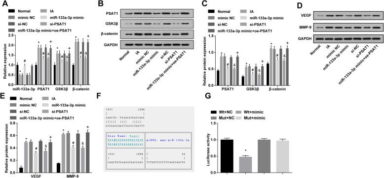 Overexpression of miR-133a-3p and low expression of PSAT1 decrease PSAT1, GSK3β, and β-catenin, VEGF and MMP-9 expression in IA tissues in vivo and PSAT1 is a target gene of miR-133a-3p. a Detection of miR-133a-3p, PSAT1, GSK3β, and β-catenin expression in IA tissues of rats in each group by RT-qPCR. b Protein bands of PSAT1, GSK3β, and β-catenin. c Detection of PSAT1, GSK3β, and β-catenin protein expression in IA tissues of rats in each group by western blot analysis. d Protein bands of VEGF and MMP-9. e Detection of VEGF and MMP-9 protein expression in IA tissues of rats in each group by western blot analysis. f Prediction of the target site of PSAT1 binding to the corresponding miR-133a-3p by Target Scan. g Result of dual luciferase reporter gene assay. a – e , n = 12; f – g , N = 3, * P
