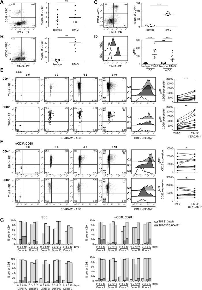 Expression analysis of TIM‐3 and CEACAM1. Flow cytometry analysis of TIM‐3 expression on freshly isolated PBMCs derived from healthy donors. CD19 + cells (A), CD56 + cells (B), and CD14 + cells (C) were analyzed for TIM‐3 expression. (D) Immature (iDC) and mature DCs were stained with TIM‐3 mAb (black histograms) or isotype control (open histograms). (A–D) Left: one representative donor; right: each dot represents one donor. Median is shown. (E and F) CD4 + and CD8 + T cells in freshly isolated PBMCs and PBMCs stimulated in vitro with staphylococcal enterotoxin E (SEE) (E) or immobilized aCD3/aCD28 mAb (F) for 3, 6, and 10 days were analyzed for TIM‐3, CEACAM1, and CD25 expression, respectively. In the stimulated samples, the gate was set on proliferated (CFSE low ) cells. Left panels: dot plots from one representative donor are shown. For better visibility larger dots were used in dot plots depicting TIM‐3 and CEACAM1 expression in CD8 + T cells upon stimulation with SEE. Middle‐right panels: histogram overlay shows gMFI of CD25 expression on day 10 of the indicated populations. Right panels: summarized data of CD25 expression in the TIM3 + versus TIM3 + /CD66a + subset upon SEE (17 donors/8 experiments with 1–3 donors each) or aCD3/aCD28‐stimulation (11 donors/6 experiments with 1–3 donors each). (G) Bar diagrams from five representative donors (from three experiments with one or two donors) show percentages of CD66a + ‐expressing cells within the TIM3 + population. For statistical evaluation, paired t ‐tests (A–C; E and F) and one‐way ANOVA followed by Tukey's multiple comparison test (D) were performed (*** p ≤ 0.001; ** p ≤ 0.01; * p ≤ 0.05; ns, p > 0.05).