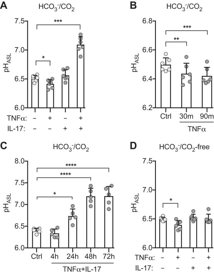 Combination of TNFα and IL-17 increases pH of airway surface liquid (pH ASL ). Primary cultures of differentiated human airway epithelia were treated with TNFα (10 ng/mL), IL-17 (20 ng/mL), or both for the indicated times, and pH ASL was measured using SNARF-1-dextran. A : HCO 3 − /CO 2 -containing Krebs-Ringer ( n = 6). B : TNFα alone in HCO 3 − /CO 2 -containing Krebs-Ringer for indicated times ( n = 6). C : TNFα and IL-17 in HCO 3 − /CO 2 -containing Ringers for indicated times ( n = 5). D : HCO 3 − /CO 2 -free Krebs HEPES buffer ( n = 6). Each data point represents epithelium from a different donor. Light and dark gray circles represent control and cytokine-treated epithelia, respectively. Bars indicate means and SD. * P