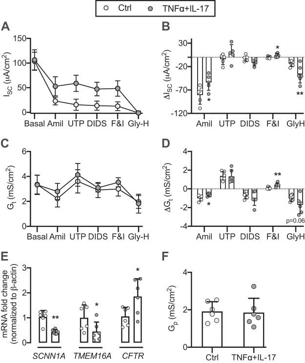 TNFα+IL-17 increase CFTR activity and expression. After TNFα+IL-17 treatment for 24 h, human airway epithelia were mounted in modified Ussing chambers with symmetric Krebs-Ringer solution gassed with 5% CO 2 . Epithelia were voltage clamped followed by continuous recording of short-circuit current ( I SC ) and transepithelial conductance ( G t ) as pharmacologic agents were sequentially added to the apical chamber. A – D : I SC , Δ I SC , G t , and Δ G t in control and TNFα+IL-17-treated epithelia. E : TNFα+IL-17-induced changes in SCNN1A , TMEM16A , and CFTR transcript abundance. F : estimate of paracellular conductance ( G p ) obtained from residual G t after inhibition of epithelial Na + channel (ENaC), calcium-activated anion channel (CaCC), and CFTR. For A – D , n = 5 different donors; for E and F , n = 6 different donors. Bars indicate means and SD. Statistical significance between control and TNFα+IL-17-treated epithelia was tested using paired Student's t test. * P