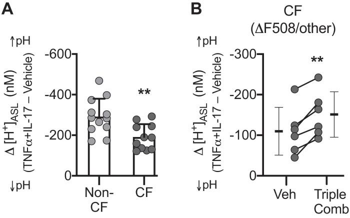 Non-CFTR mechanism(s) mediate TNFα+IL-17-induced airway surface liquid (ASL) alkalinization and operate in tandem with CFTR. Human airway epithelia were treated with TNFα+IL-17 for 24 h, and pH of ASL (pH ASL ) was measured with SNARF-1-dextran in the presence of HCO 3 − /CO 2 . pH ASL values were converted to [H + ] ASL , and net alkalinization was calculated as the difference (Δ[H + ] ASL ) between control and TNFα+IL-17-treated epithelia. A : TNFα+IL-17-induced alkalinization in non-cystic fibrosis (CF) vs. CF epithelia ( n = 12 different donors for non-CF and 11 different donors for CF group). B : TNFα+IL-17-induced alkalinization in CF donors carrying at least one F508-CFTR allele. Epithelia were treated with either vehicle (DMSO) or the recently approved triple combination of CFTR correctors (3 μM VX-445, 18 μM VX-661, 1 μM VX-770) for 48 h, with the addition of cytokines for the last 24 h ( n = 6). CF epithelia in A and B were from different donors and were studied at different times. Bars indicate means ± SD. Groups were compared with unpaired ( A ) or paired ( B ) Student's t test. ** P