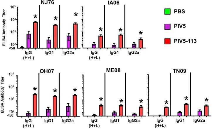Evaluation of PIV5-113-induced antibodies against parental HA, using ELISA: IgG (H + L), IgG1, and IgG2a. Mice were vaccinated with either PBS, PIV5, or PIV5-113, and sera were collected after delivery of a boost, as described above. Results were obtained using sera from PBS-inoculated mice (IgG (H + L): n = 18 for NJ76 and IA06, n = 20 for OH07, ME08, and TN09, IgG1: n = 18 for NJ76, IA06, OH07, ME08, and TN09, IgG2a: n = 18 for NJ76, IA06, OH07, ME08, and TN09), PIV5-inoculated mice (n = 40), and PIV5-113 (n = 38). *Indicates a significant difference (P