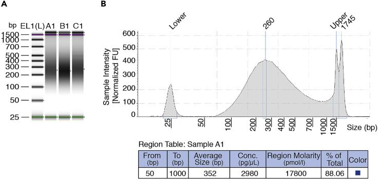 Example Sonicated Chromatin (Input Samples) from H1 hESC Cultured in mTeSR1 on Matrigel, Separated on an Agilent Tapestation System with a High Sensitivity D1000 ScreenTape Both the pseudo-gel image (A) and the plot of signal intensity vs predicted fragment size (B) show that the majority of the DNA lies in the 100 bp to 500 bp range, with an intensity peak at 260 bp and an average size of 352 bp for signal over the 50–1,000 bp range. Upper (1,500 bp) and Lower (25 bp) size markers are indicated.