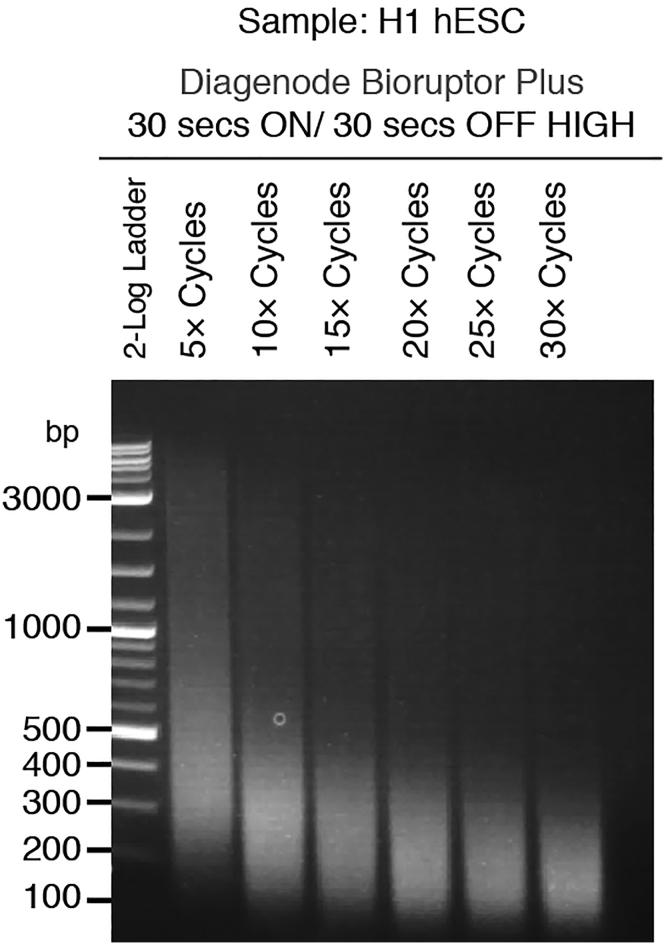 An Example of a Sonication Optimization Experiment, Where Fixed H1 hESCs Were Sheared Using a Bioruptor Plus Sonication System for the Indicated Number of Cycles of 30 s ON/30 s OFF Sheared DNA was then purified and separated on a 1.8% Agarose Gel. 10 was determined to be the minimum number of cycles required to shear the majority of chromatin into the 100 bp to 500 bp range.