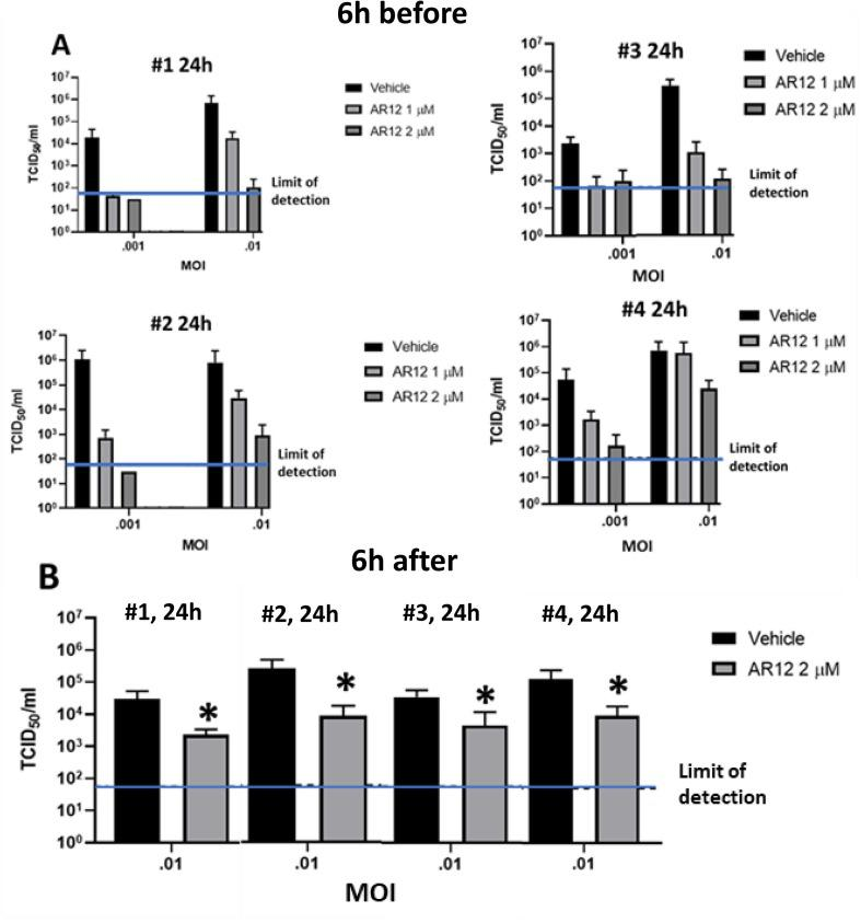 AR12 suppresses the production of infectious SARS-CoV-2 virions. A. Four independent TCID 50 / ml studies are presented, each study in independent quadruplicate. Vero cells were pre-treated with AR12 and 6h afterwards infected, and 24h later the media was removed from the cells. The media was diluted 1:10, with repeated 1:10 dilutions using the Reed-Muench method. B. Four independent TCID 50 / ml studies are presented, each study in independent quadruplicate. Vero cells were infected then after 6h treated with AR12, and 24h later the media was removed from the cells. The media was diluted 1:10, with repeated 1:10 dilutions using the Reed-Muench method.