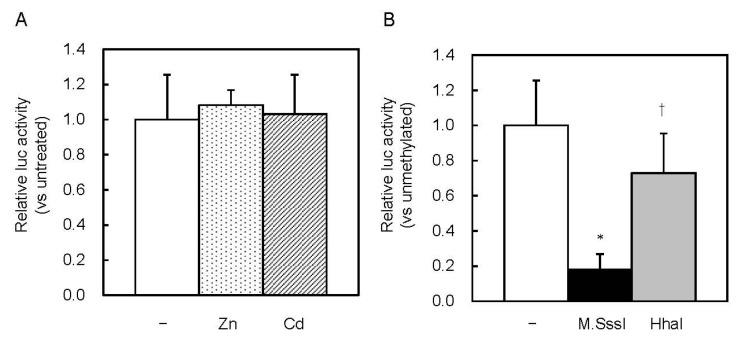 Effect of CpG methylation on MT1 promoter activity in MTF1 KO cells. ( A ) Cells were transfected with unmethylated Lucia reporter vectors. Reporter gene expression was measured 6 h after Zn or Cd addition. Values for neither treatment group were significantly different from the untreated group. ( B ) MTF1-KO cells were transfected with unmethylated or M.SssI- or HhaI methyltransferase-methylated Lucia reporter vectors. Values are expressed as the means ± SD from three independent experiments. * p