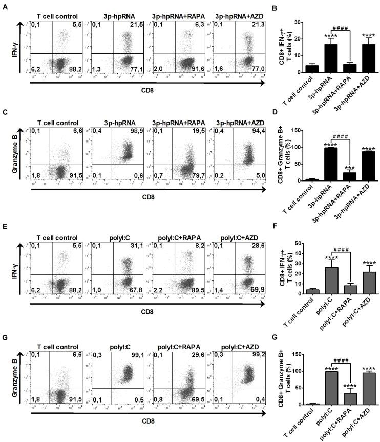 Rapamycin but not AZD8055 decreased the T cell activating capacity of RLR-activated moDCs. Naïve CD8 + T cells were co-cultured with allogeneic moDCs pre-treated with the indicated reagents. After 6 days of co-cultivation T cells were stimulated with phorbol myristate acetate (0.1 μg/ml) and ionomycin (1 μg/ml) in the presence of monensin for 5 h. IFN-y and Granzyme B production of CD8 + T cells was measured by intracellular cytokine staining using flow cytometry. (A,C,E,G) Data from one representative experiment are shown. Numbers in quadrants indicate percent cells in each. In A and E as well as in C and G T cell controls are the same, since representative dot plots originate from the same set of experiment from one single donor. (B,D,F,H) Bar graphs represent the mean ± SD of 6 independent experiments. *** p
