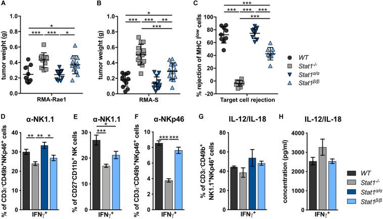 Stat1 β/β , but not  Stat1 α/α , mice show reduced NK cell-dependent anti-tumor activity,  in vivo  cytotoxicity and impaired production of IFNγ in response to actR stimulation.  (A,B)  1 × 10 6  RMA-Rae1  (A)  or RMA-S  (B)  cells were s.c. injected in both flanks of  WT ,  Stat1 –/– ,  Stat1 α/α , and  Stat1 β/β  mice. Ten days after injection the tumors were isolated and weighed. Tumor weight ( n  = 9–14) and mean values ± SD from two experiments are shown.  (C) WT ,  Stat1 –/– ,  Stat1 α/α , and  Stat1 β/β  mice were i.v. injected with a 1:1 mix of CFSE low  stained  WT  and CFSE high  stained MHC I low  (β 2m –/– ) splenocytes. The ratio of CFSE low  and CFSE high  cells in the spleen of recipient mice was determined 16 h after injection by flow cytometry. Mean percentages ± SD ( n  = 9) from three experiments are given.  (D–F)  Splenocytes from  WT ,  Stat1 –/– ,  Stat1 α/α , and  Stat1 β/β  mice were stimulated with tube-bound anti-NK1.1 antibody  (D,E) , tube-bound anti-NKp46 antibody  (F)  and IL-12 (5 ng/ml) and IL-18 (25 ng/ml)  (G) , and incubated in the presence of brefeldin A. IFNγ production was analyzed by intracellular staining of NK cells  (D,F,G)  or M2 mature NK cells (CD27 – CD11b + )  (E) . Mean percentages ± SEM from six ( n  = 6–18)  (D) , three experiments ( n  = 9)  (E) , one experiment ( n  = 3)  (F) , and two experiments ( n  = 5–6)  (G)  are shown.  (H)  Magnetic beads-purified NK cells were stimulated with IL-12 (5 ng/ml) and IL-18 (25 ng/ml) for 6 h. IFNγ was determined in the culture supernatant by ELISA. Mean IFNγ concentrations ± SEM from one experiment ( n  = 3) is depicted. * p
