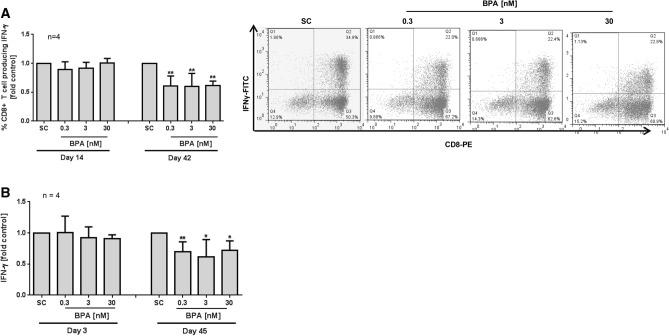 Long-term impact of BPA on cytokine levels of CD8 + T cells. Long-term culture of CD8 + T was done using anti-CD2/3/28 beads and IL-2. The cells were continuously exposed to BPA or solvent control (SC = 0.01% DMSO). ( A ) On day 14 or 42 of culture, CD8 + cells were stimulated with PMA/ionomycin and <t>Brefeldin</t> A for 4 h. Then, intracellular IFN-γ expression was analysed using anti-CD8-PE coupled with anti-IFN-γ FITC with a FACSCalibur. Representative scattergrams of intracellular IFN-γ expression at 42d from one experiment are shown. ( B ) Supernatants, harvested on day 3 or 45 of long-term culture were used for analysis of IFN-γ release. To correct for inter-individual differences, each value of BPA treated cells was normalized to its respective SC sample. Raw data are given in Supplement Fig. 2 B, C. Bars are means + SD. Significance of difference was calculated relative to the respective control, * p
