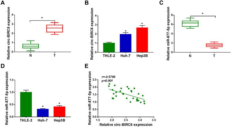 Circ-BIRC6 was upregulated and miR-877-5p was downregulated in HCC. ( A ) The expression of circ-BIRC6 was detected by qRT-PCR in normal tissues, and HCC tissues. ( B ) Circ-BIRC6 level was detected by qRT-PCR human normal liver cells (THLE-2), and HCC cells (Huh-7 and Hep3B). ( C ) The level of miR-877-5p was measured by qRT-PCR in normal tissues and HCC tissues. ( D ) MiR-877-5p level was measured by qRT-PCR in THLE-2 cells, and HCC cells (Huh-7 and Hep3B). ( E ) The correlation between circ-BIRC6 and miR-877-5p was analyzed in HCC tissues. * P