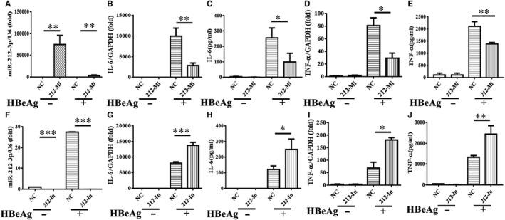 The inflammatory response of HBeAg‐induced macrophages was inhibited by miR‐212‐3p. miR‐212‐3p mimics and negative control were transfected into RAW264.7 macrophages for 24 h, then the cells were treated with HBeAg for 24 h, and the expression of miR‐212‐3p (A) and level of IL‐6 (B, C), <t>TNF‐α</t> (D, E) were tested by q‐PCR and <t>ELISA.</t> miR‐212‐3p inhibitor and negative control were transfected into RAW264.7 macrophages for 24 h, then the cells were treated with HBeAg for 24 h; and the expression of miR‐212‐3p (F) and level of IL‐6 (G, H), TNF‐α (I, J) were tested by q‐PCR and ELISA. Data are shown in at least three independent experiments (mean ± SD of triplicates in A‐J). * P