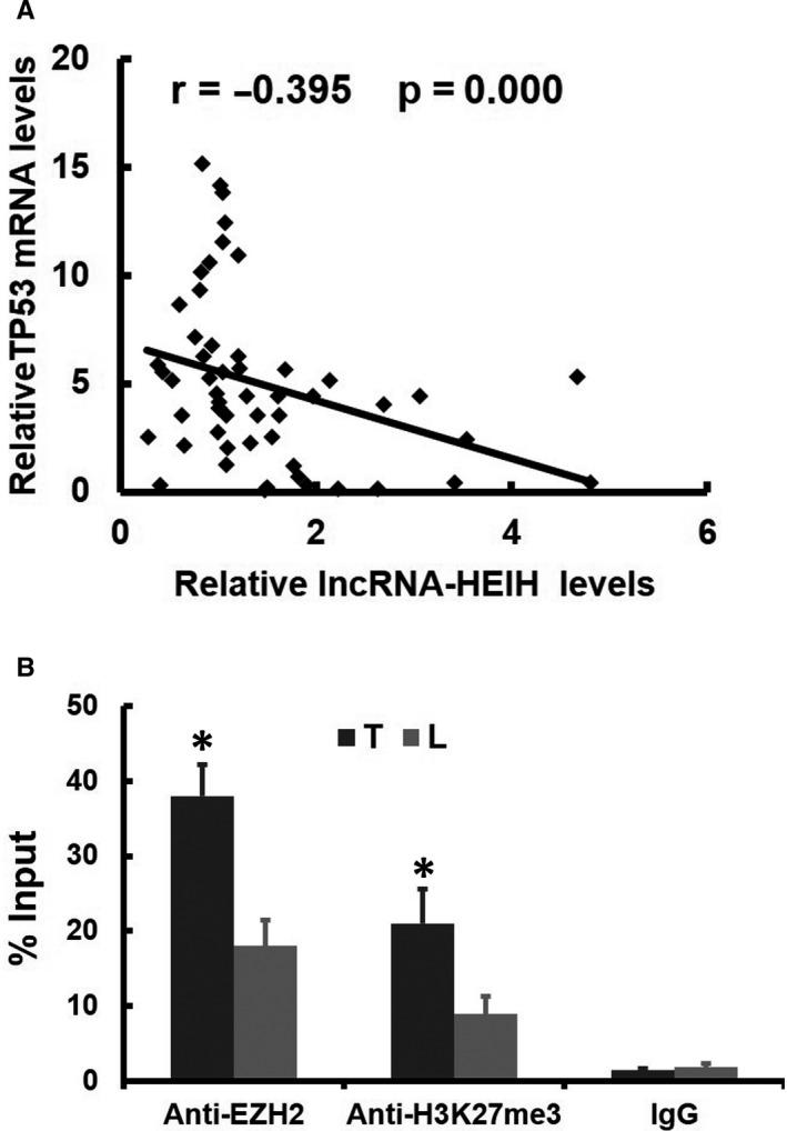 Validation in Clinical Samples. (A) Expression levels of lncRNA‐HEIH and TP53 were negatively correlated in ESCC samples, as measured by real‐time PCR. The relative expression values (normalized to β‐actin) were subjected to Pearson correlation analysis. (B) ChIP analyses of ESCC and adjacent tissues (n = 12) were conducted on the lncRNA‐HEIH promoter regions using anti‐EZH2 and H3K27me3. Enrichment was determined relative to input controls. The data are the means ± standard deviations of three independent experiments