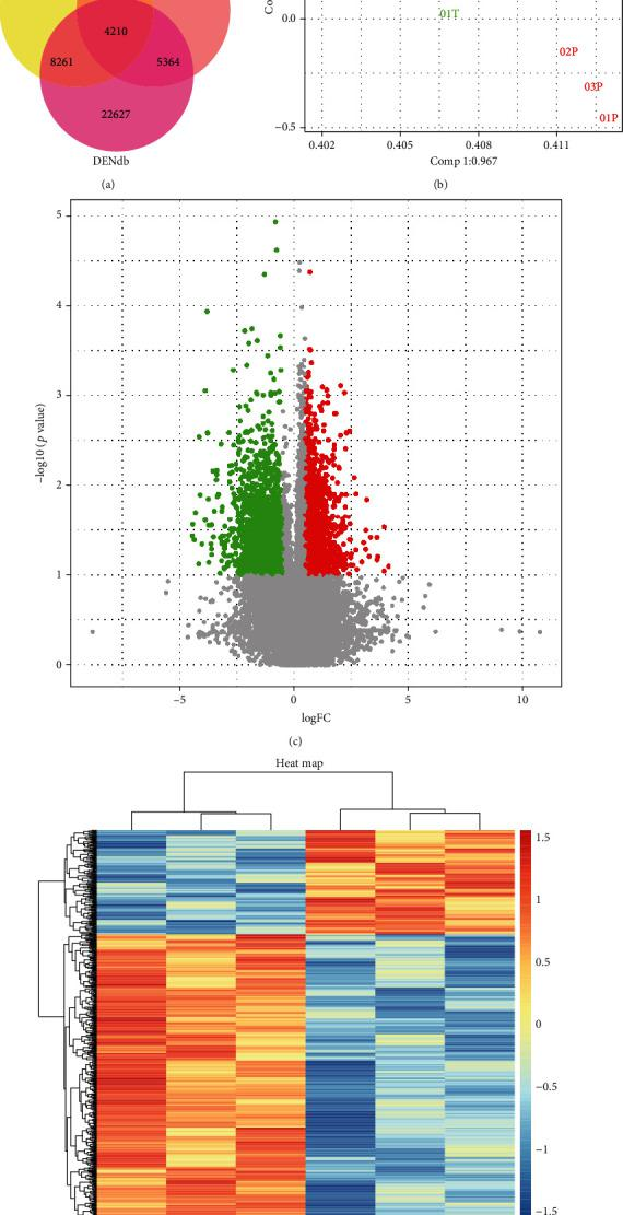 Overview of differentially expressed eRNAs in prostate cancer. (a) Venn diagram showing the overlap of eRNAs identified from DENdb, ENCODE, and STARR-seq (GSE82204). (b) Principal component analysis (PCA) score plots, the expression pattern of each sample from the same condition were similar, which showed the high reliability and reproducibility of the microarray data. (c) Differentially expressed eRNAs in a microarray were filtered by a volcano plot that was filtered by fold change ≥ 2, p value