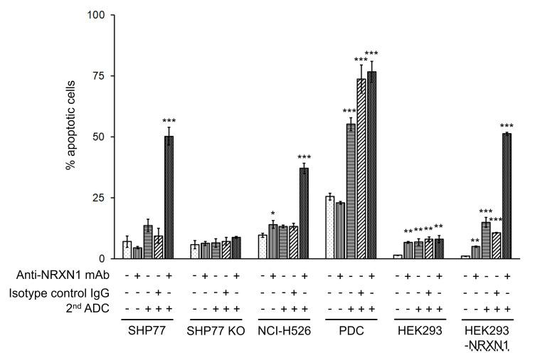 Apoptosis assay of NRXN1-targeted ADC at IC 50 dose calculated by growth inhibition curves. Late apoptotic cells were quantified by Cy7-conjugated annexin-V and PI using flow cytometry. Results were analyzed using a one-way ANOVA followed by the Dunnett multiple comparisons test ( * P