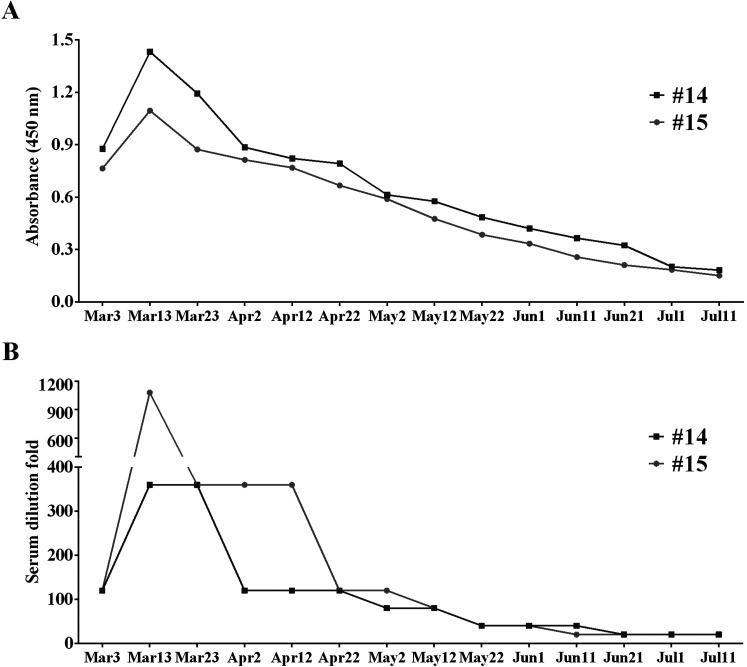 The dynamic change of cat serum antibody for SARS-CoV-2. (A) ELISA detection and (B) neutralization test of cat serums. The serums of Cat#14 and Cat#15 were collected every 10 days from Mar. 3 to Jul. 11. Then the ELISA against SARS-CoV-2 RBD and the virus neutralization test were performed.