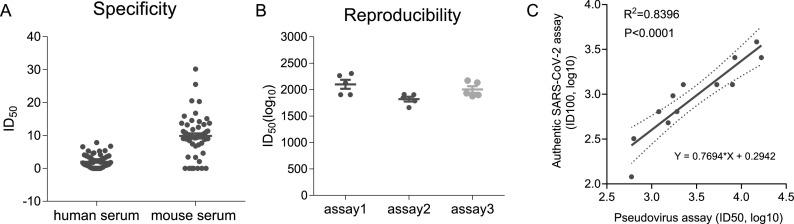 Validation of the VSVdG-SARS-CoV-2-Sdel18 pseudovirus assay. (A) Specificity of the pseudovirus assay. A negative sample panel including 59 human sera and 58 mouse sera were used to determine the specificity of this assay. (B) Reproducibility of the pseudovirus assay. One COVID-19 convalescent patient serum sample was tested 14 times on individual plates in three independent experiments. The virus titer of VSVdG-SARS-CoV-2-Sdel18 pseudovirus was consistent in these assays (MOI=0.05). (C) The correlation of neutralizing titer measured by the VSVdG-SARS-CoV-2-Sdel18 pseudovirus assay (ID50, log10) and the wild type SARS-CoV-2 neutralization assay (ID100, log10).