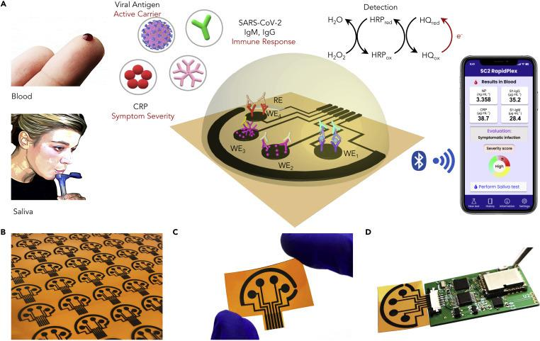 A Wireless Graphene-Based Telemedicine Platform (SARS-CoV-2 RapidPlex) for Rapid and Multiplex Electrochemical Detection of SARS-CoV-2 in Blood and Saliva (A) Schematic illustration of the SARS-CoV-2 RapidPlex multisensor telemedicine platform for detection of SARS-CoV-2 viral proteins, antibodies (IgG and IgM), and inflammatory biomarker C-reactive protein (CRP). Data can be wirelessly transmitted to a mobile user interface. WE, working electrode; CE, counter electrode; RE, reference electrode. (B) Mass-producible laser-engraved graphene sensor arrays. (C) Photograph of a disposable and flexible graphene array. (D) Image of a SARS-CoV-2 RapidPlex system with a graphene sensor array connected to a printed circuit board for signal processing and wireless communication.