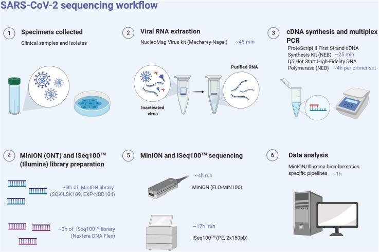 SARS-CoV-2 next-generation sequencing workflow, from the sample to sequence analysis. Created with biorender.com .